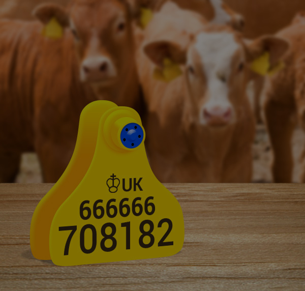 new run cattle tags