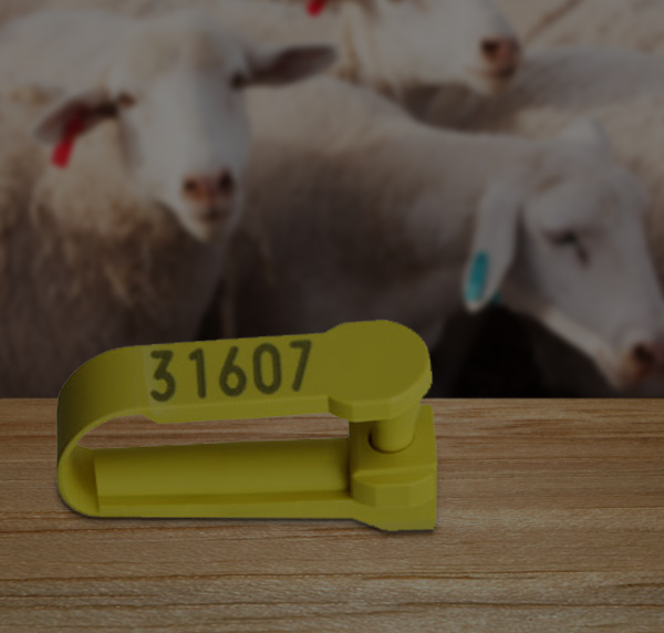 sheep and goat tags