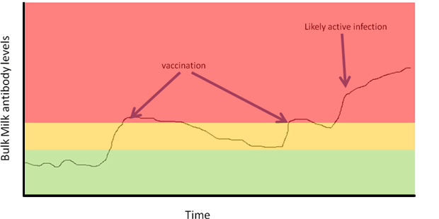BVD Vaccination graph